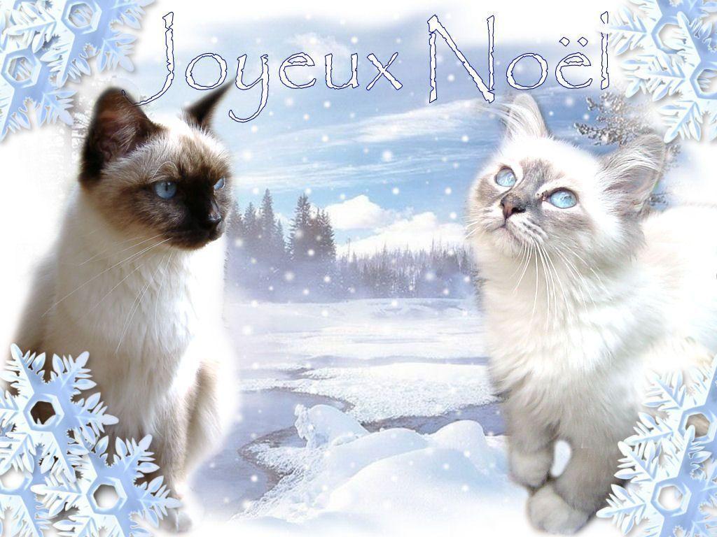 Fond ecran chats - Image animaux gratuite ...